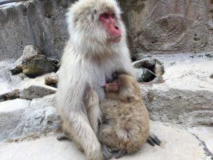母猿と子猿