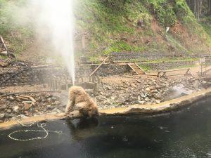 温泉猿のオナラ
